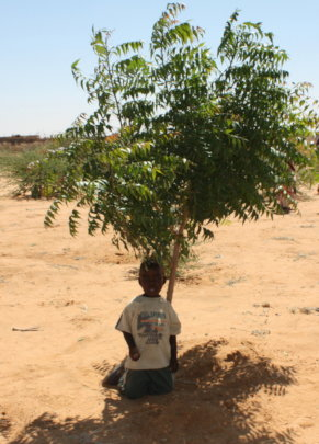 Trees Reforest the Desert, Provide Shade and more!