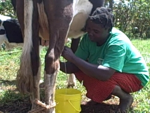 Ms wamuyu milking her cow and background is the calf
