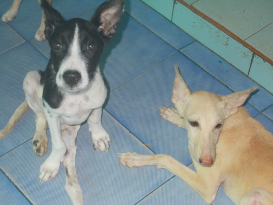 Shanti (right)...Sekar (left).