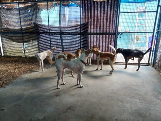 Helen's dogs--After being in our care six weeks.