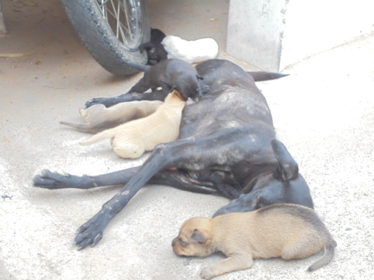 Some of the Precious Homeless Ones we protect.