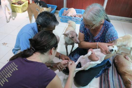 Our beloved Elaine, the veterinarian nurse.