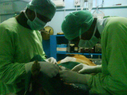 Dr. Raja's magical hands...and beautiful Heart.
