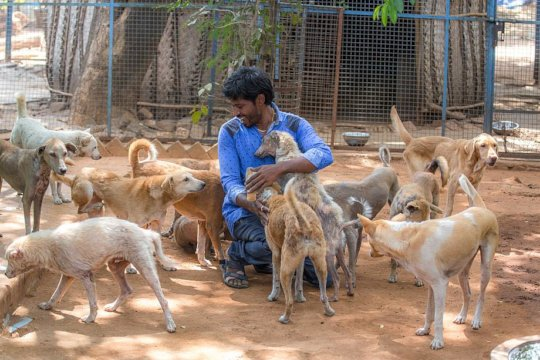 They simply love Vishwa...All the animals do.