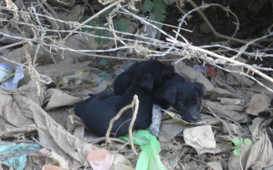 More Homeless Sweetiepies just before Rescue.