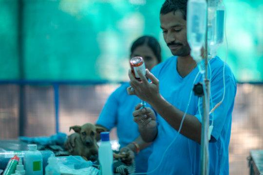 Gentle Dr. Ramakrishna.