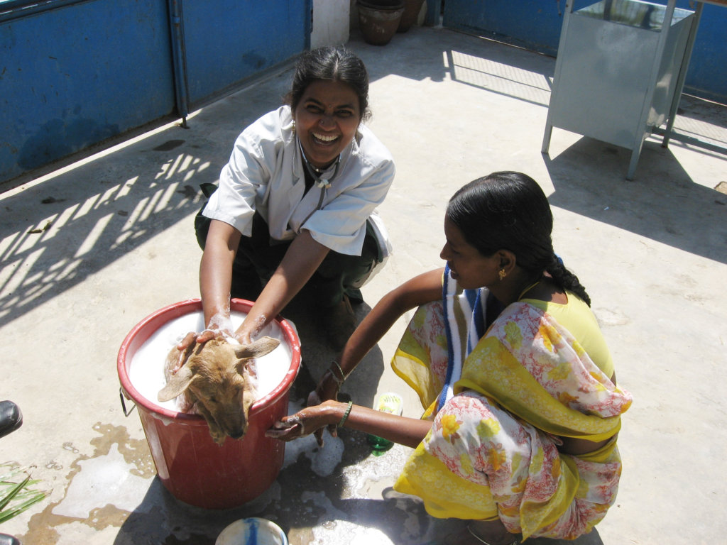 Rescue,Love,Save-1000's of Suffering Animals.India