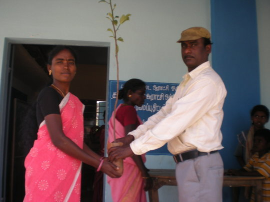 A beneficiary receives  matured sapling