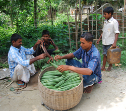 Vegetable traders buying produce from the farmers at collection
