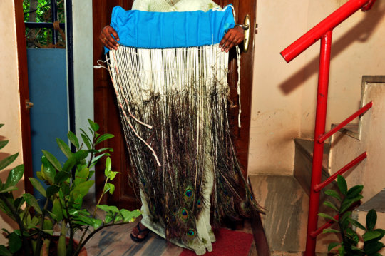 Peacock's Skirt