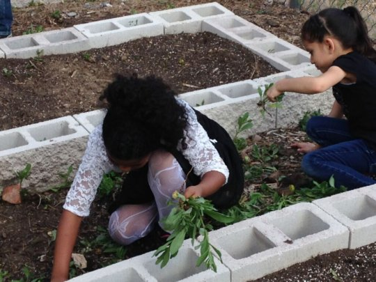 Students Help Clear Paths