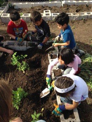 Garden Club Planting
