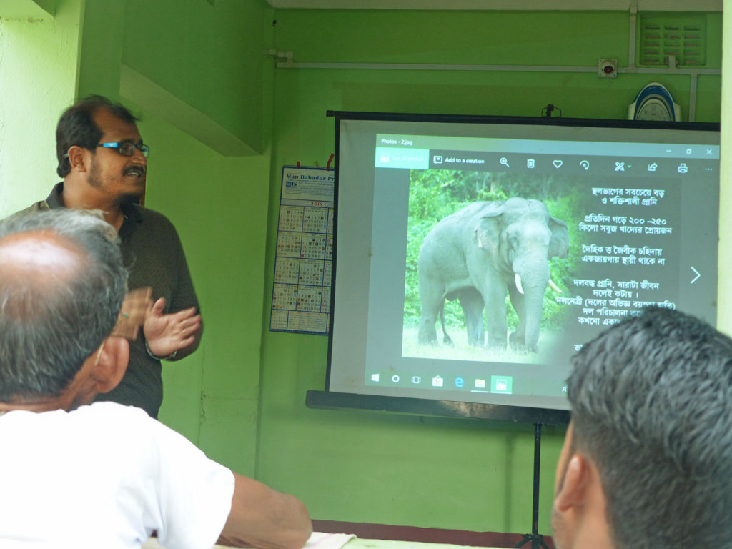 Help Save Elephants in India
