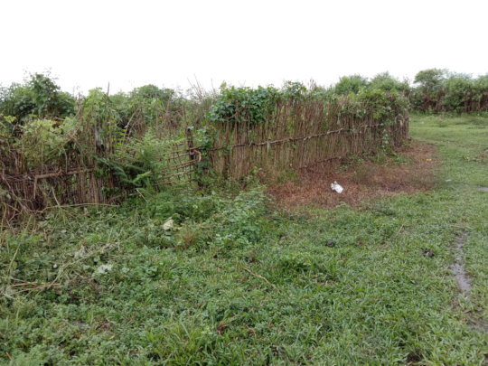 Vegetation cleared by the Gram Panchayat and team