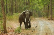 Help stop the poaching of elephants in India