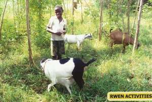 Henry with goats