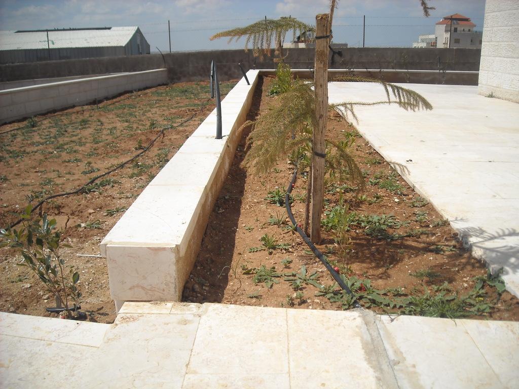 Palm tree and drip irrigation