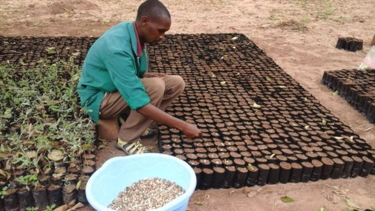 DNRC nursery staff planting moringa