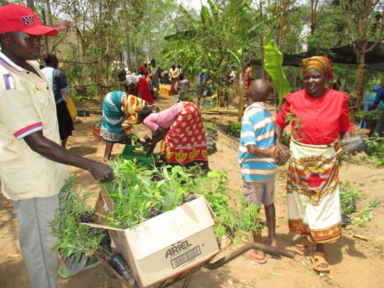 farmers being issued with moringa seedlings