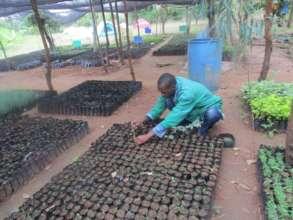 moringa nursery