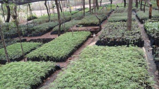 tree nursery with moringa seedlings and other spp