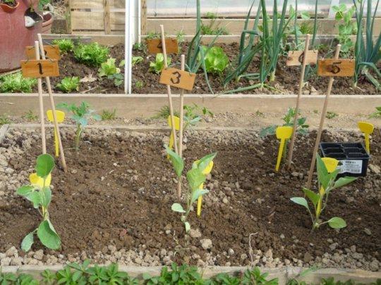 Vegetable garden in Italy_2