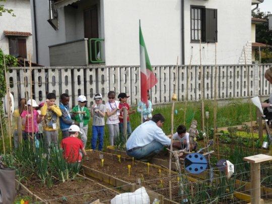 Vegetable garden in Italy_4