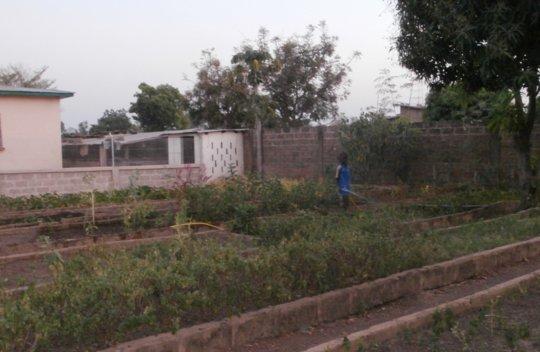 Vegetable garden in Benin_3