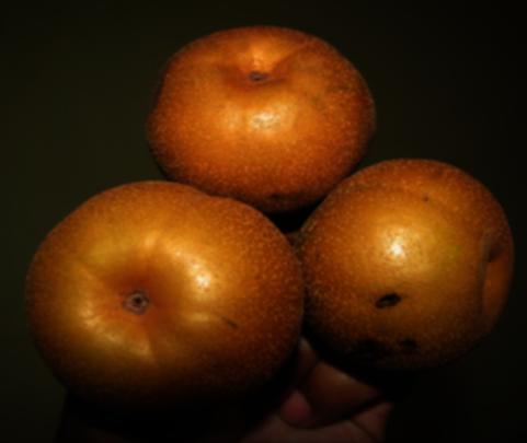 the Wild Himalayan Pear