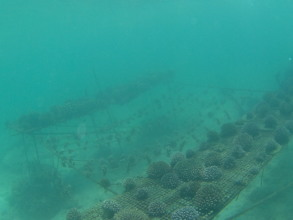 Coral nursery, two tables with ropes in between