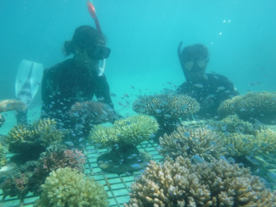 Sarah and Keleni and Friends with Super Corals