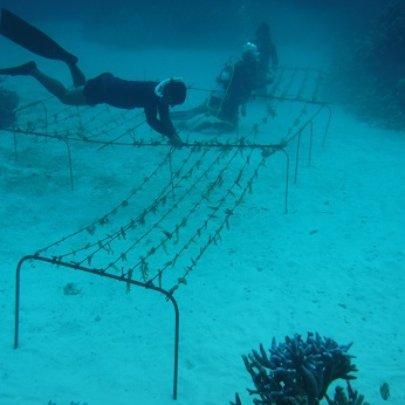 Tuvalu's first 'super coral' nursery