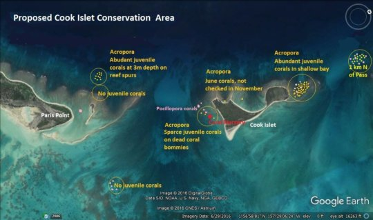 Map of nursery site and newly settled corals.
