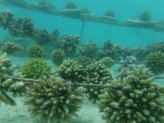 Corals are trimmed by parrotfish and grow rounded
