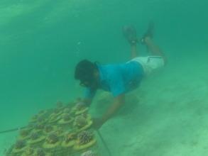 Tobu and the corals