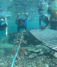 Pango Coral Nursery Helpers
