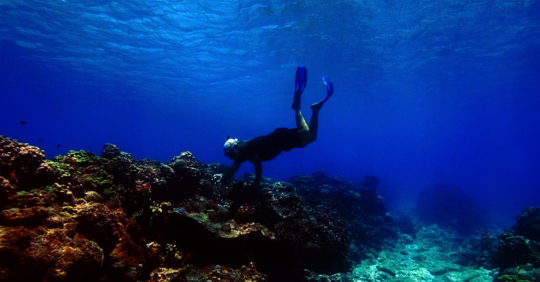 Searching for super corals among the dead corals