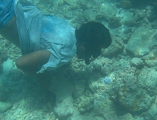 Finding baby corals settling on the dead reef!