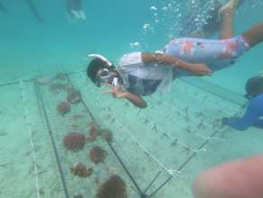 Sarah, a coral gardener hired by a local resort