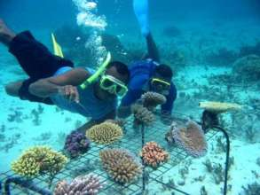 Emergency Response to Massive Coral Bleaching