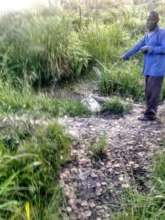 The Pond where Mr. Kalule used to fetch water