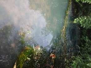 Algae-filled water source