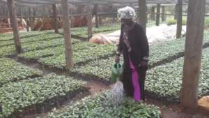 A beneficiary watering her garden from borehole