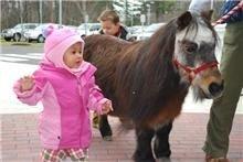 """Personal Ponies """"Senior Citizens"""""""