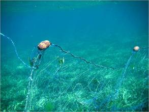 Nets and traps are the worst enemy to marine conservation