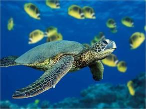 Coral fish used to be abundant in Kenya
