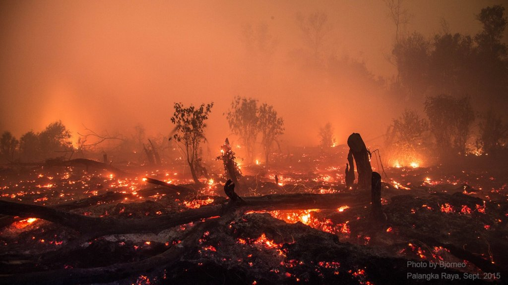 Kalimantan Haze Emergency Appeal