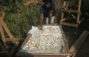 Creation of Community Mushroom Cultivation Center