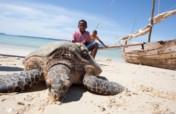 Save dugongs & sea turtles in the Indian Ocean!