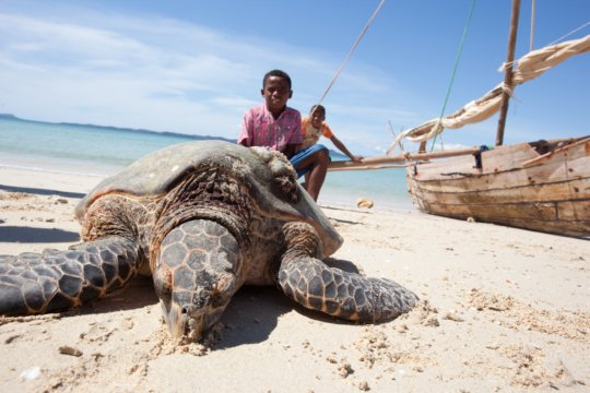 Save dugongs & sea turtles in the Indian Ocean!
